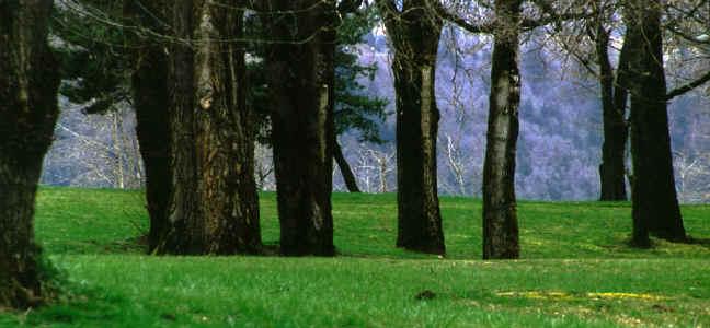 Dark_Trees_small.jpg